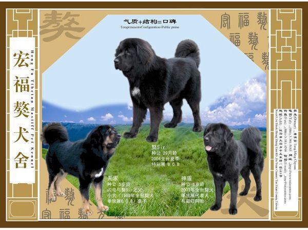 2006年於中國之廣告