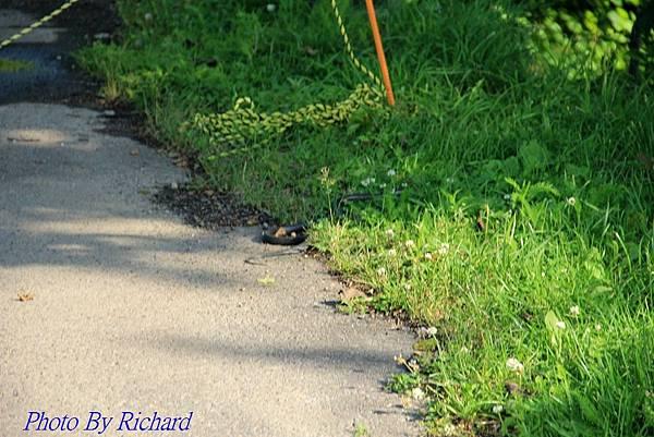 Rich 15_54_08121.jpg