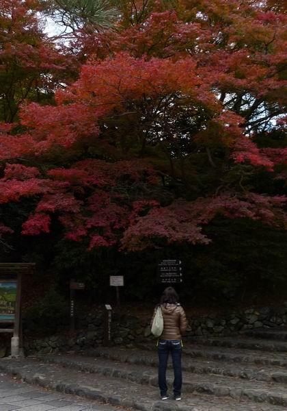 調整大小嵐山公園-遊客3.jpg