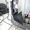 HITACHI日立洗衣機SF-BW10JV59