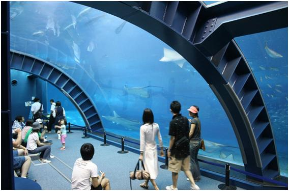 The-Okinawa-Churaumi-Aquarium-Japan_Churaumi-Aquarium_537