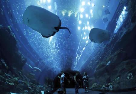 dubai-aquarium2