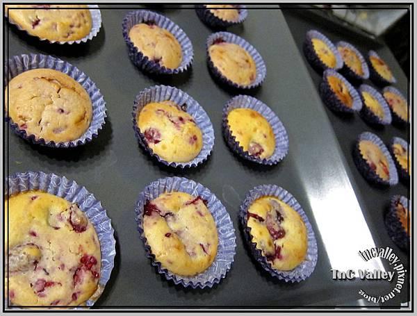 muffin 013