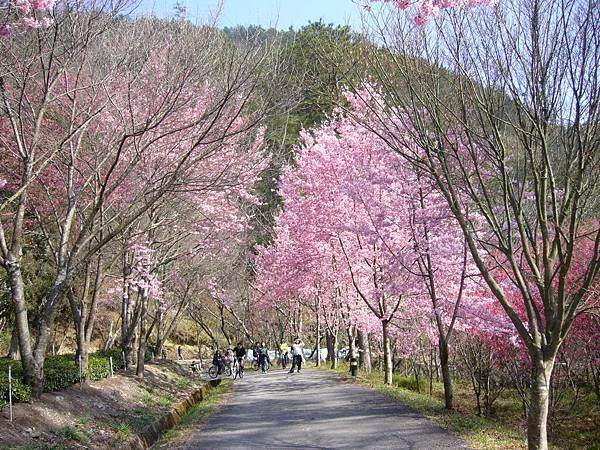20090221-22武陵農場237.JPG