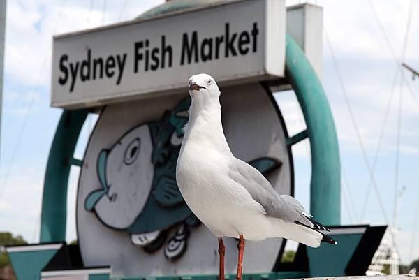 Sydney Fish Market 1.jpg