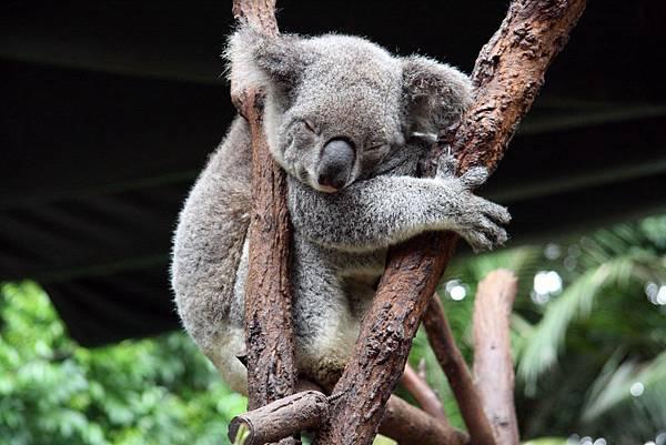 Sydney Koala Park31.jpg