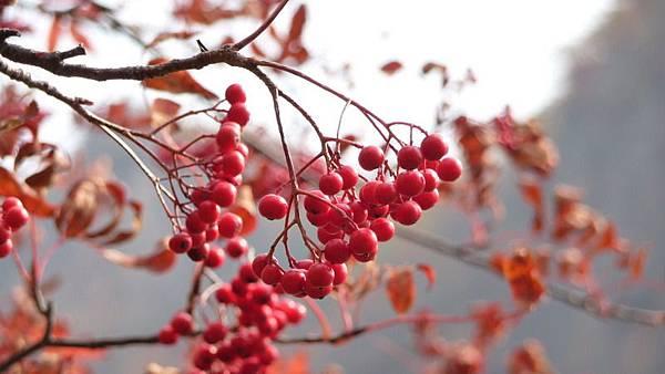 登別溫泉的果子.JPG