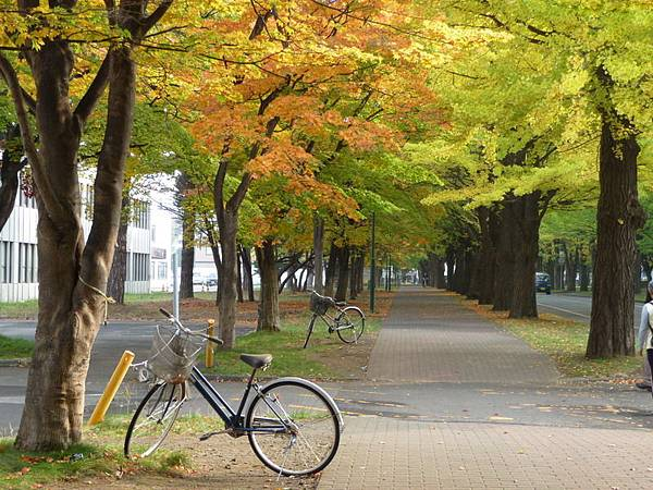 北海道大學.JPG