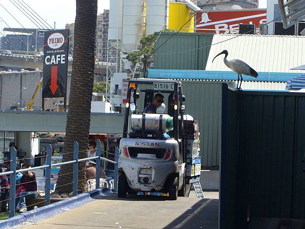 20090204-0302澳洲雪梨0123.JPG