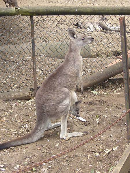 20090204-0302澳洲雪梨0026.JPG