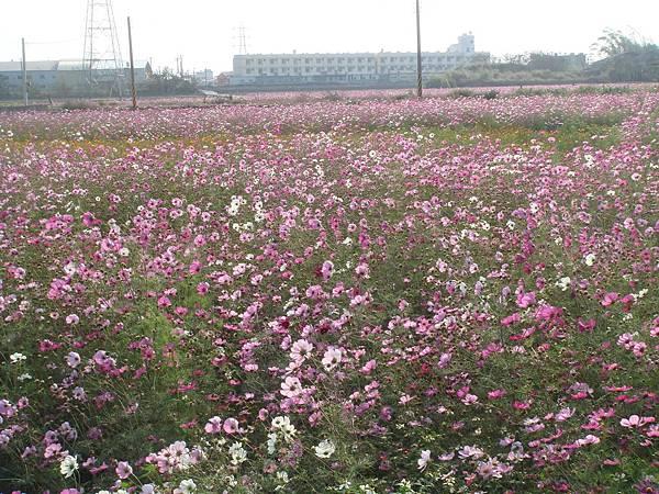 20080208台南.jpg