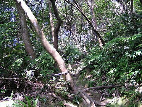 猴山岳風景1