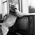 2Christian-On-TV1-150x150.jpg