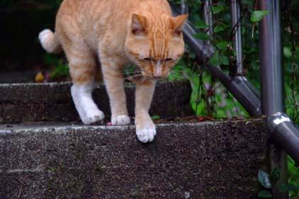 cat041110_02.jpg