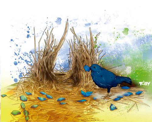 動物明星秀-園丁鳥