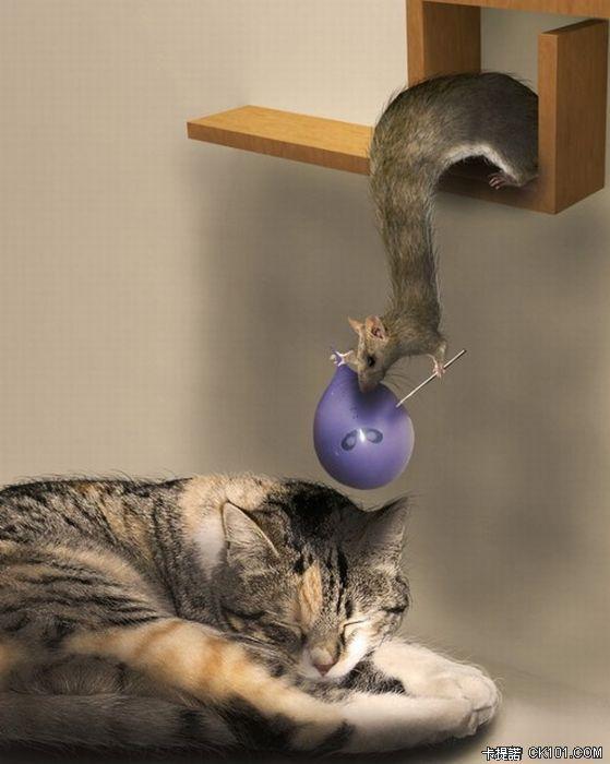 鼠與貓的戰爭.jpg