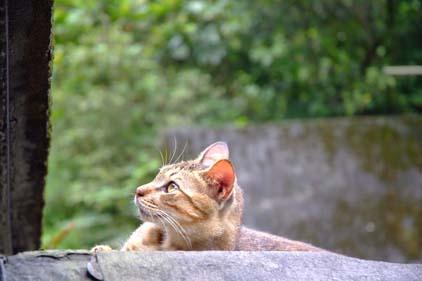 cat041110_05.jpg