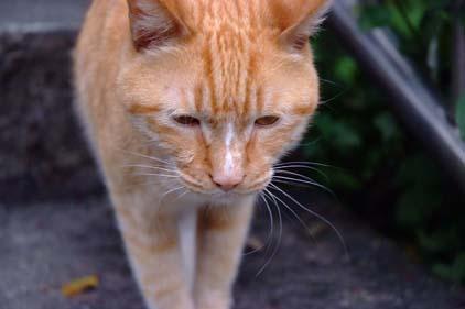cat041110_03.jpg