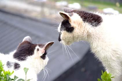cat041110_04.jpg