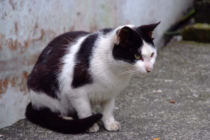 cat041110_01.jpg