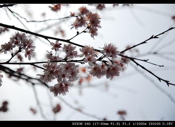 DSC_0487.jpg
