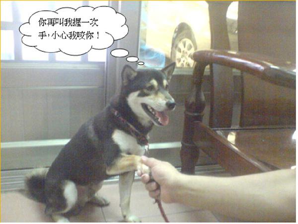 訓練狗.bmp