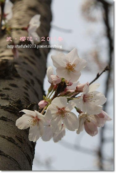 IMG_2429.JPG