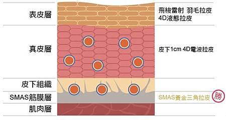 不同療程作用在皮膚組織結構的位置