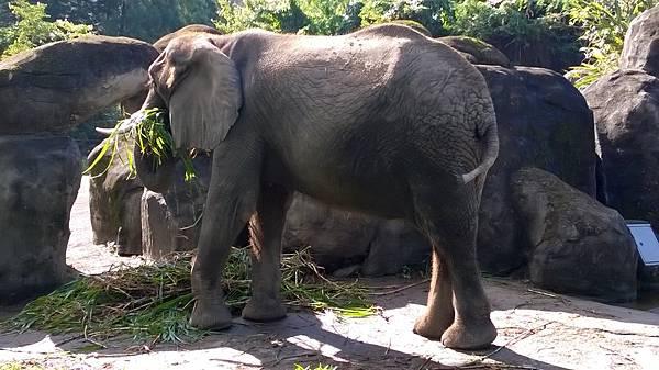 014-1大象.jpg