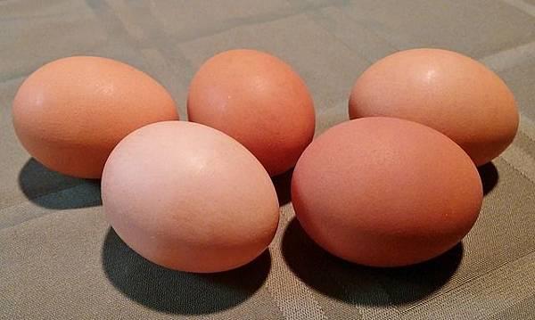 eggs-247630_640