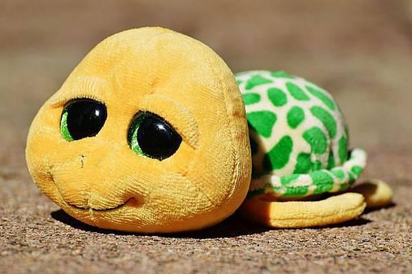 turtle-861077_640