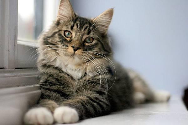 cat-1093707_960_720.jpg