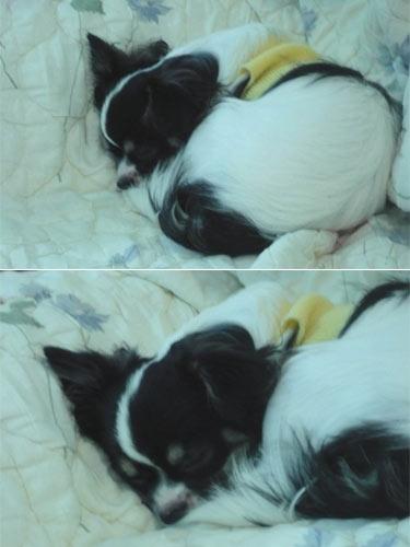 NINO睡覺 071123
