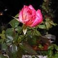 Rose Senior 20120510