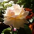 rose_0832