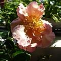 rose_0861_800