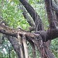 大安森林公園的松鼠