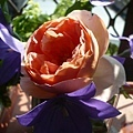 rose_1329_130430