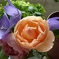 rose_1358_130504