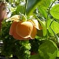 rose_1300_130508.JPG