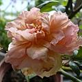 rose_1336_130705