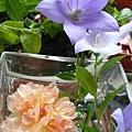 rose_1378_130821