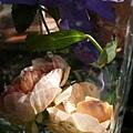 rose_1379_130826