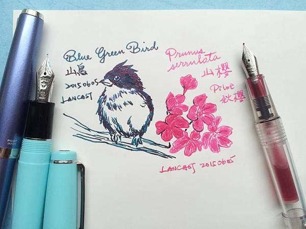 山鳥&山櫻(秋櫻)