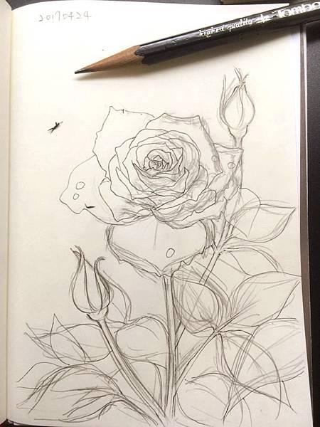 20170424 畫玫瑰