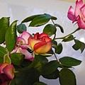 玫瑰39_090505