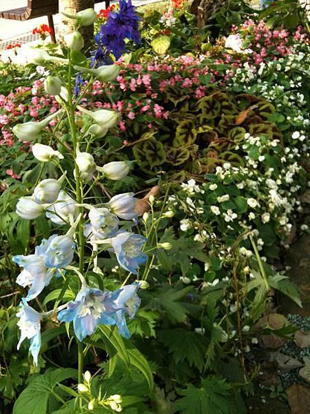 大安森林公園-花