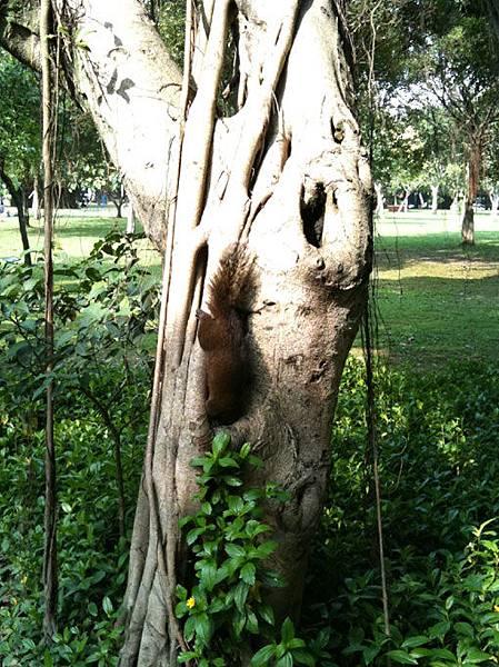大安森林公園的小松鼠 20100410