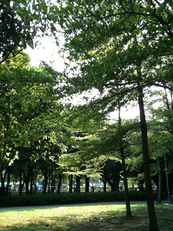 大安森林-花