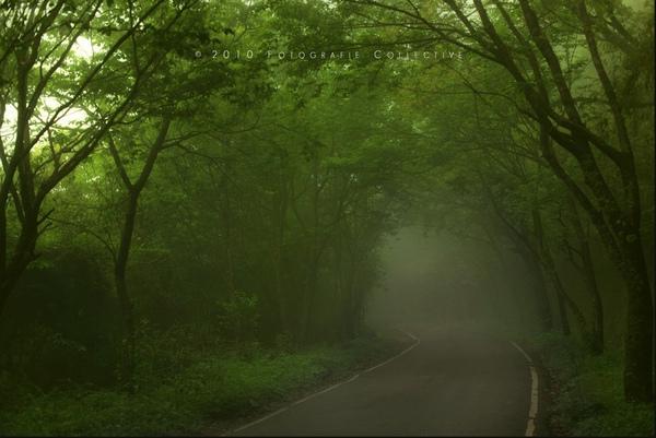 陽明山山路.jpg